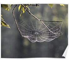 Tennessee Spider Web Poster