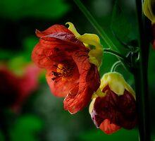 paper thin petals. by Karen  Betts