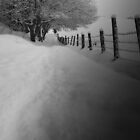 """"""" Walkie path """" by weecoughimages"""