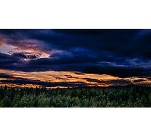 Norway forest Photographic Print