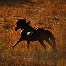 In golden fields...... by Sue Ratcliffe