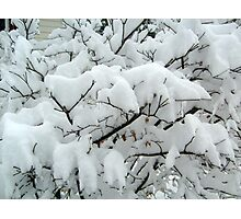 Tiny Branches Covered In Snow Photographic Print