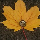 Snail on a Yellow Leaf by cindyh