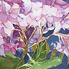 Hydrangea Jewels by Christiane  Kingsley