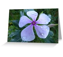 Dew Drops on Vinca Rose Greeting Card