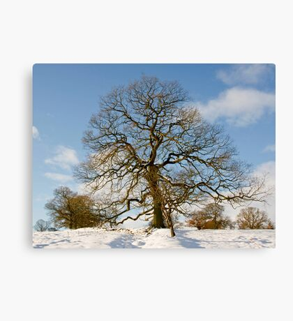 Winter Snow Scene Canvas Print