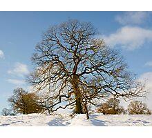 Winter Snow Scene Photographic Print