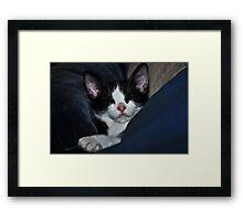 """ Catnip Nap "" Framed Print"