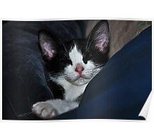 """ Catnip Nap "" Poster"
