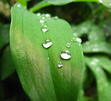 Dewdrops - Southern Oregon by mayauribe