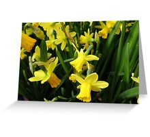 The Yellow Daffodil Choir Greeting Card