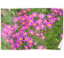 Pretty pink flowers by Oxbow Lake Poster