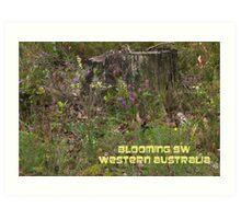Blooming SW WA Art Print