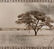 Vintage Tree in Sepia by benetta-strydom