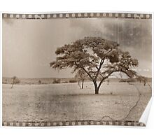 Vintage Tree in Sepia Poster