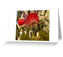 """Red Flowering Eucalyptus Macrocarpa"" Greeting Card"