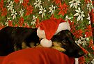 Indy - Waiting for Santa by Sandy Keeton