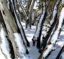 Snow Gums by Helen Martikainen