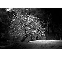 Lonely Tree - Melbourne Photographic Print