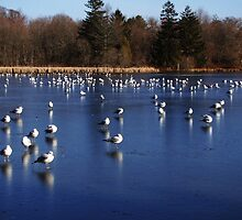 Seagulls on frozen pond... by Poete100