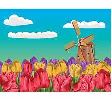 Windmill and Tulips Photographic Print