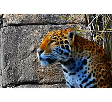 Jaguar meets Fractalius Photographic Print