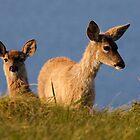 Reyes Deer by Mike Stone