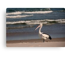 Beach Pelican Canvas Print