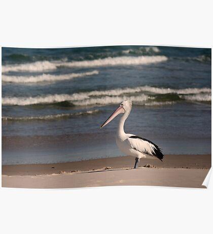 Beach Pelican Poster