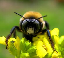 Bee Mine by Tibby Steedly