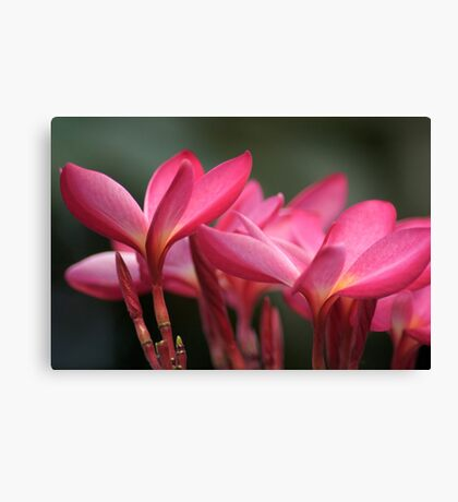 Pink Parade...Got 2 Featured Works Canvas Print