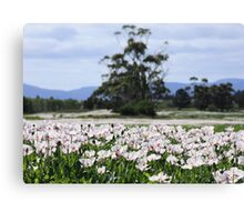 Opium Poppy Fields Canvas Print