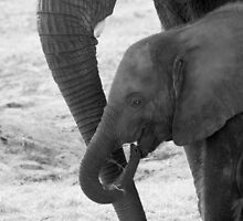 """Trunkated"" - mother and baby elephant by John Hartung"