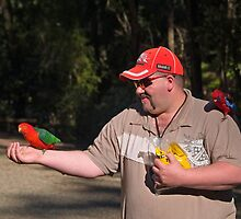 King Parrot, Crimson Rosella, feeding. by johnrf