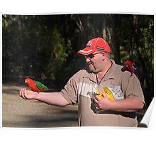 King Parrot, Crimson Rosella, feeding. Poster