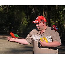 King Parrot, Crimson Rosella, feeding. Photographic Print