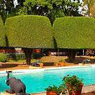 Swimming pool at Nairobi Safari Park Resort by Atanas Bozhikov NASKO