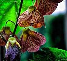 Bells of Beauty  (flowers) by Karen  Betts