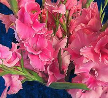 Pink Gladiolus by bloomingvine