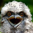baby tawny frogmouth by Susan Rees-Osborne