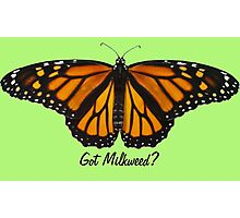 Monarch Butterfly - Got Milkweed? Photographic Print