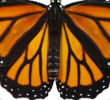 Monarch Butterfly - Got Milkweed? Sticker