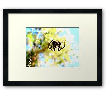 Spider Orb Framed Print