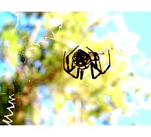 Spider Orb Photographic Print