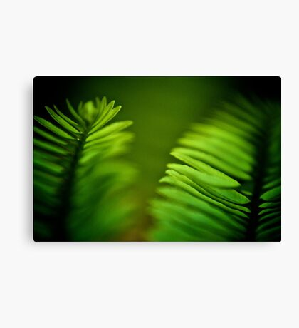 Delicate green leafs...Got 2 Featured Works Canvas Print