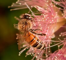 """A Bee's Delight"" by Heather Thorning"
