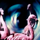 Pink Flamingo's Are Trippin by MickDodds