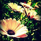 Daisy Dreaming by Vanessa Barklay
