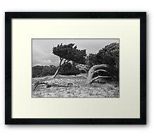trees at Jenkins' Point Framed Print