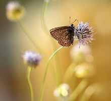 Sunny afternoon impression with small butterfly by JBlaminsky